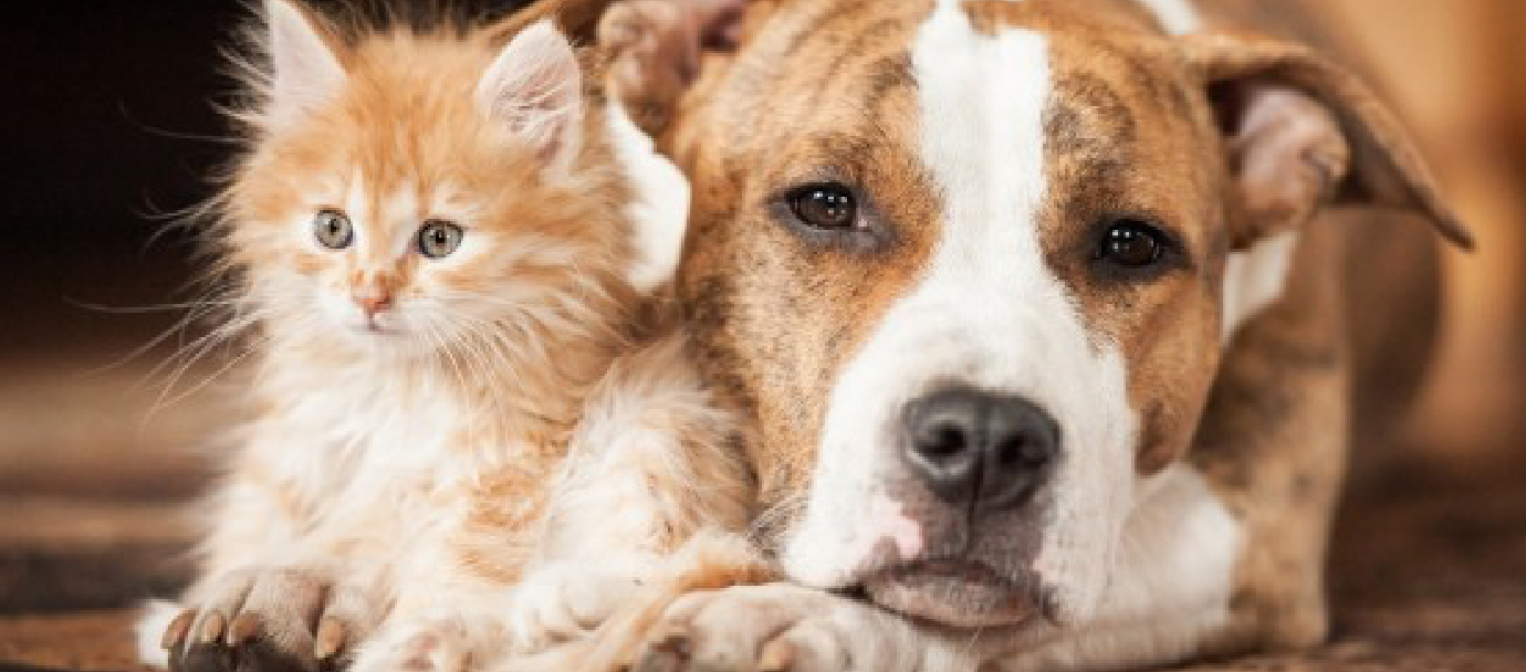 How to keep your pets safe at home