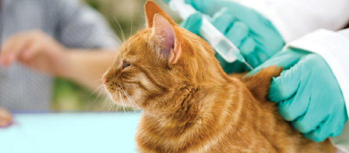 Pet vaccines and insurance